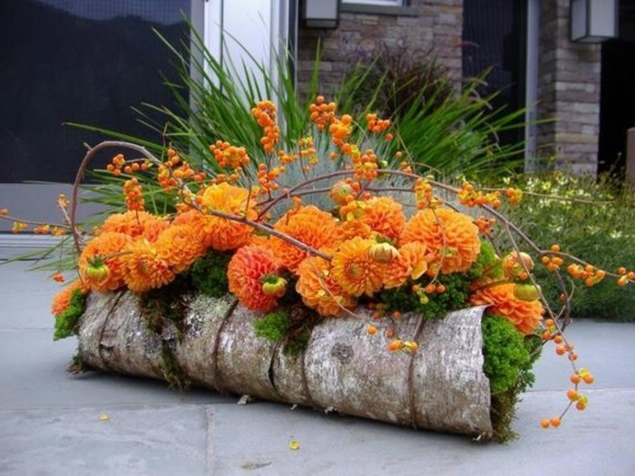 45-gazon entretien des fleurs