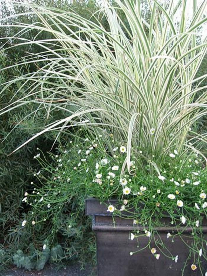 48-gazon entretien - herbe haute