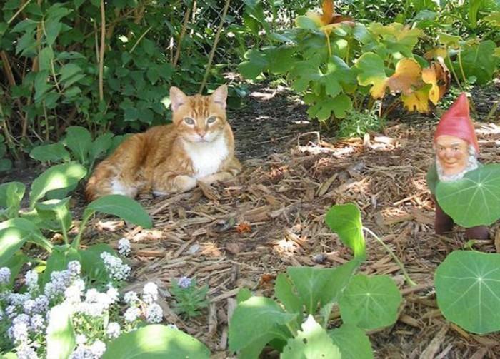 60-achat nain de jardin. Un chat.