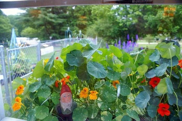 61-achat un nain de jardin, pose au milieu des fleurs
