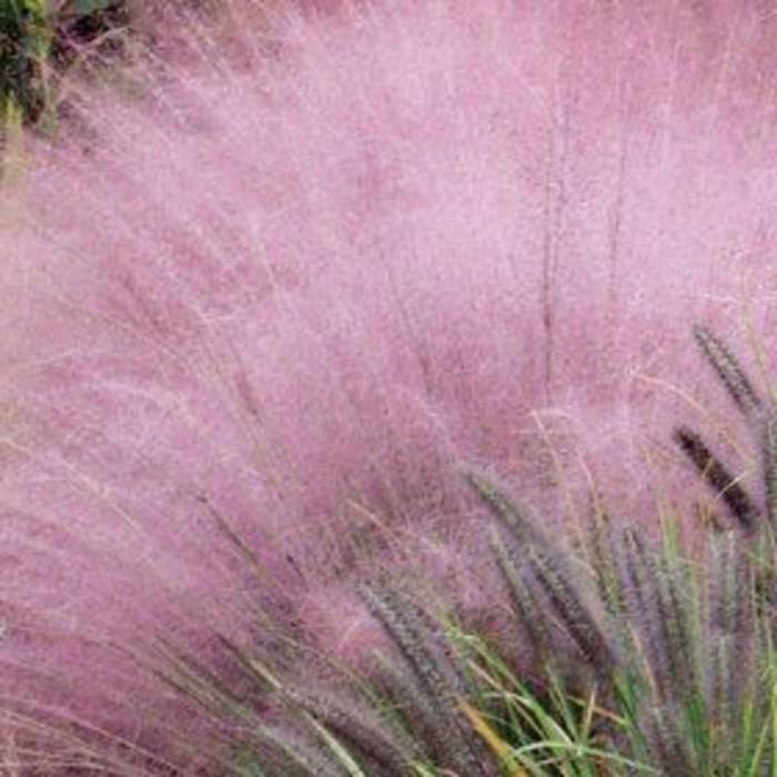 77-entretenir pelouse - feuilles en rose