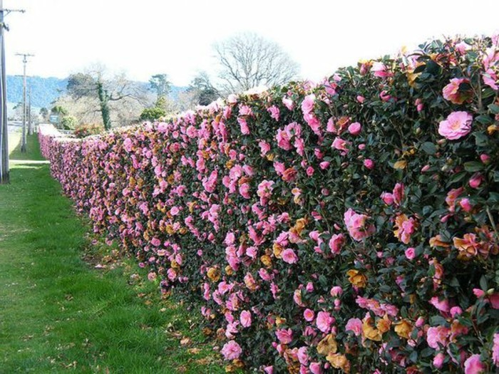 06-Mur de clôture. Fleurs.