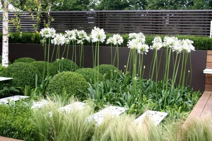 109-Murs de cloture. Fleurs blanches.