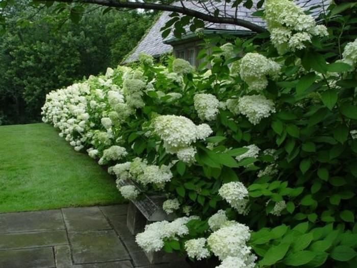 110-Murs de cloture. Toujours des fleurs blanches.