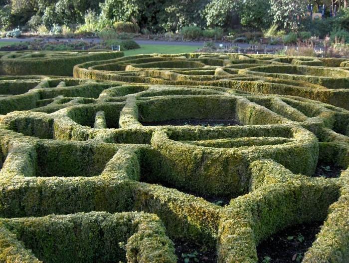 117-Arbuste buis - formation originale