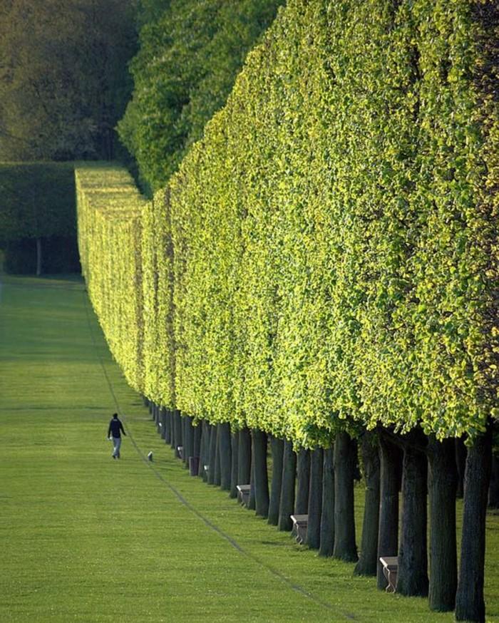 12-Mur de clôture. Beaucoup d'arbres