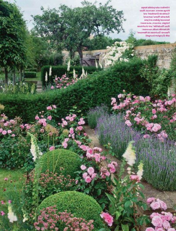 120-Murs de cloture. Lavande. Fleurs roses. Buis.