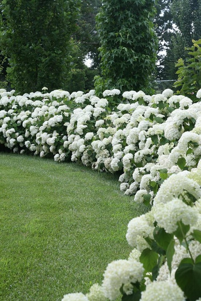 130-Cloture mur. Des fleurs blanche. Pelouse.
