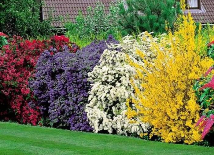 133-Cloture mur. Pelouse. Fleurs multicolores.