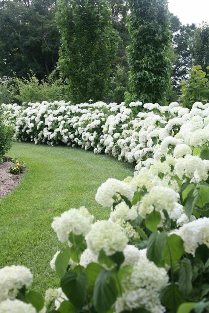 17-Mur de clôture. Pelouse. Fleurs blanches.