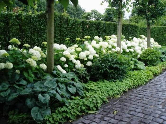 19-Mur de clôture. Sentier. Fleurs blanches
