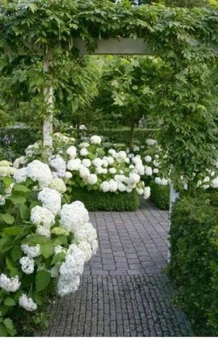 22-Mur de clôture. Buis. Fleurs blanches