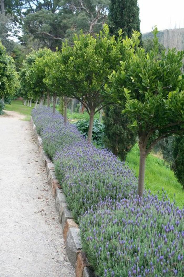 23-Mur de clôture. Fleurs lilas.