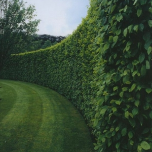 Mur de clôture - plus de 120 photos pour vous!
