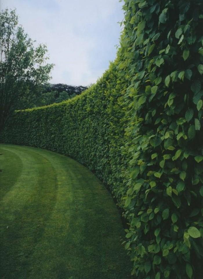 24-Mur de clôture. Buis. Pelouse.