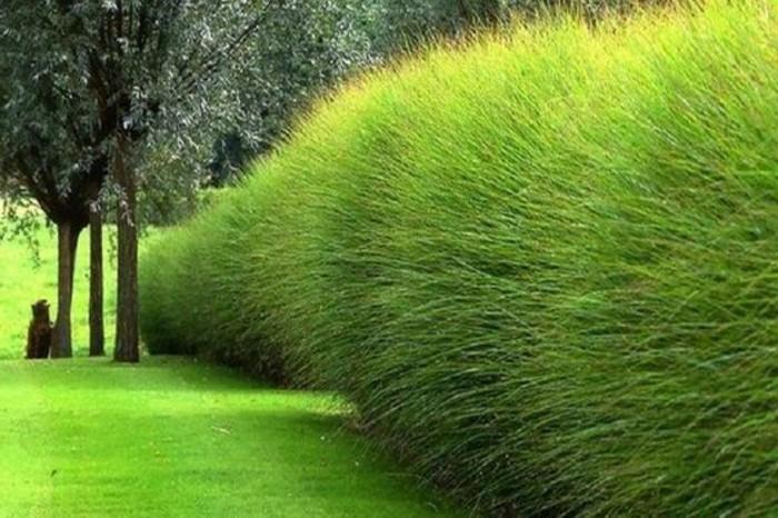 26-Mur de clôture. Herbe haute.