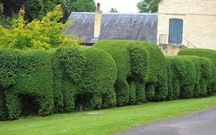 27-Mur de clôture. Buis sous la forme d'elephants.