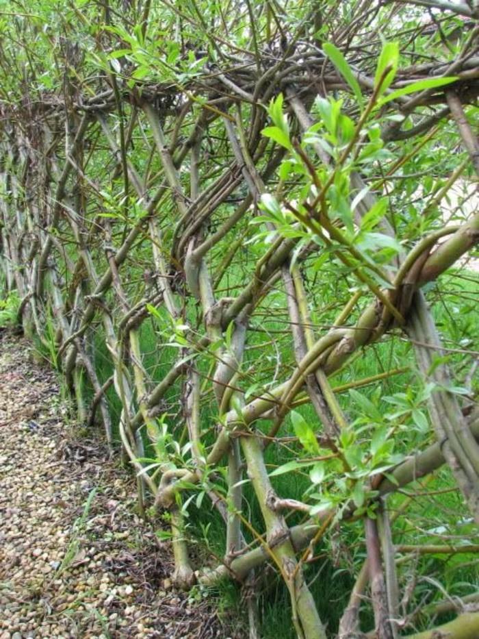 30-Mur de clôture.