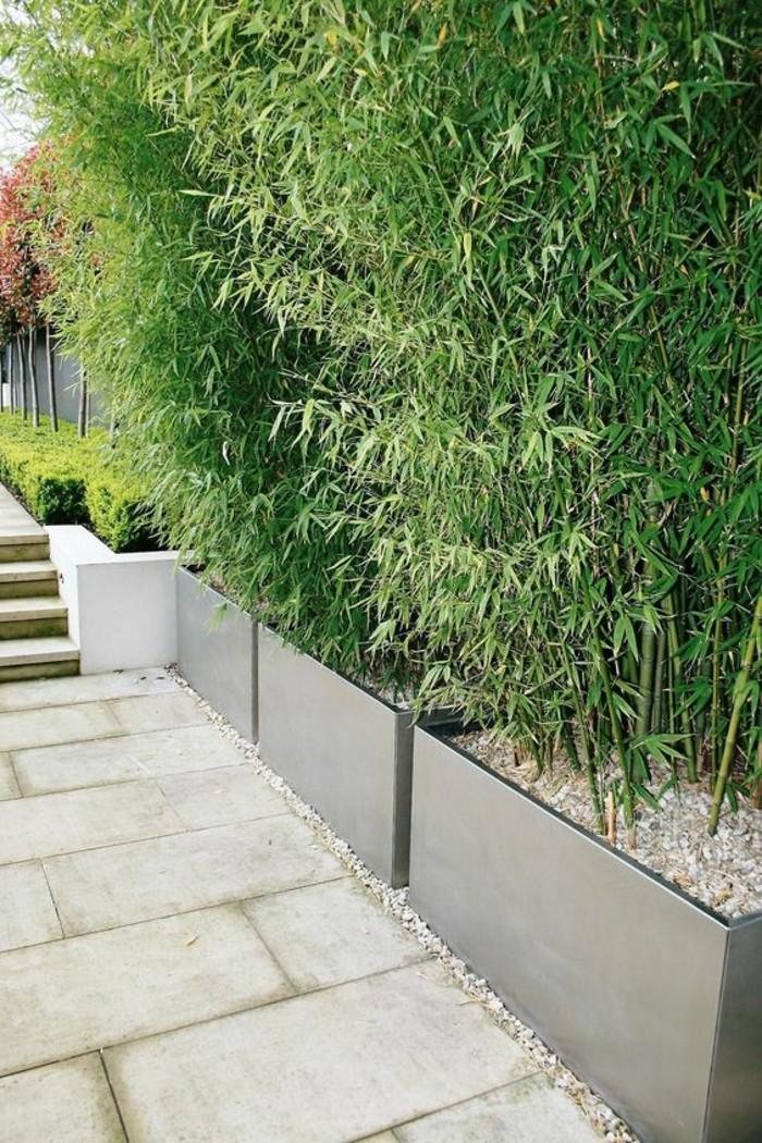 40-Mur de cloture. Plantes vertes.