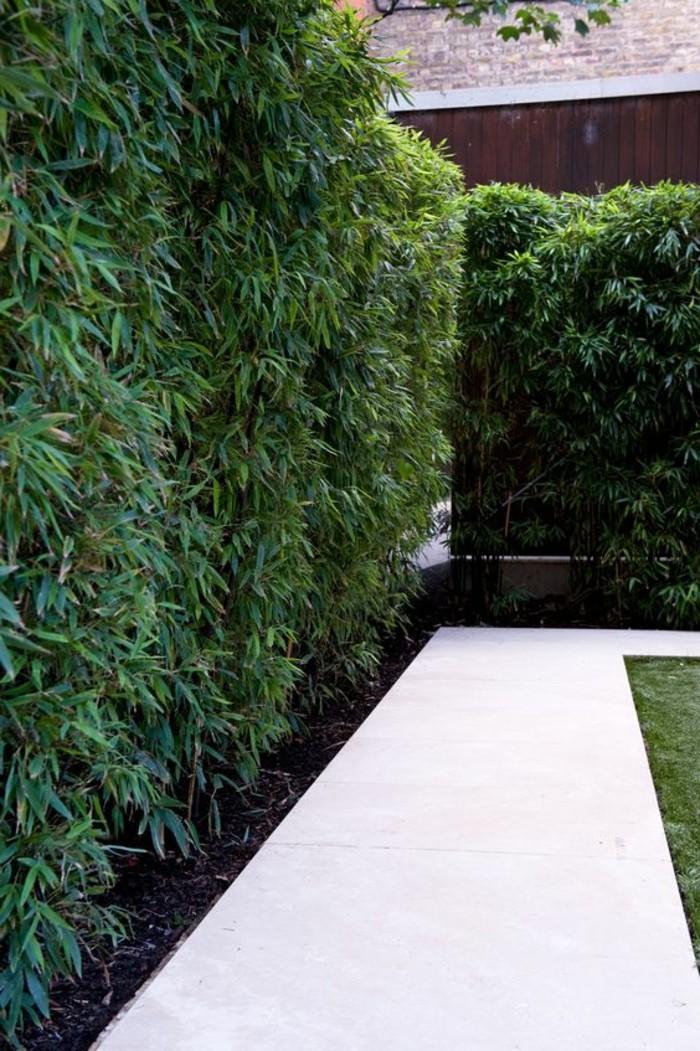 42-Mur de cloture. Verdure.