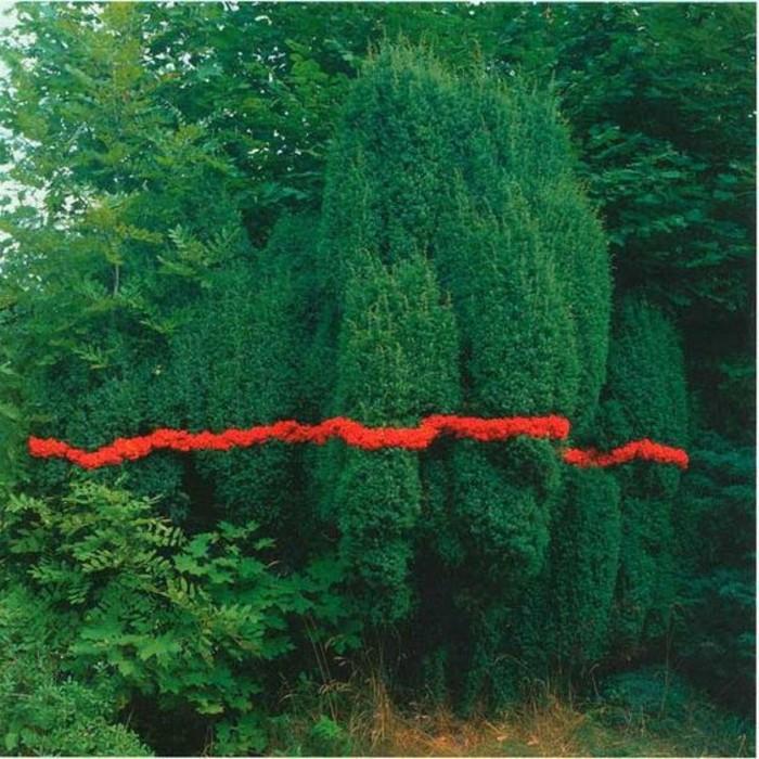 91-Murs de cloture. Verdure. Arbres