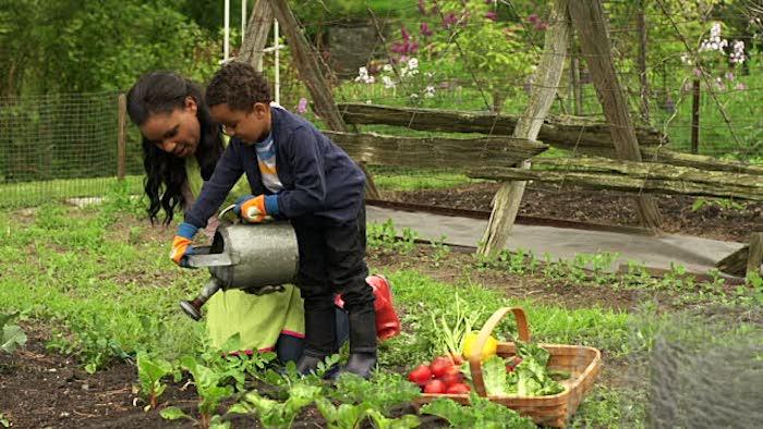 carré-potager-débutant-jardiner-facile-eau