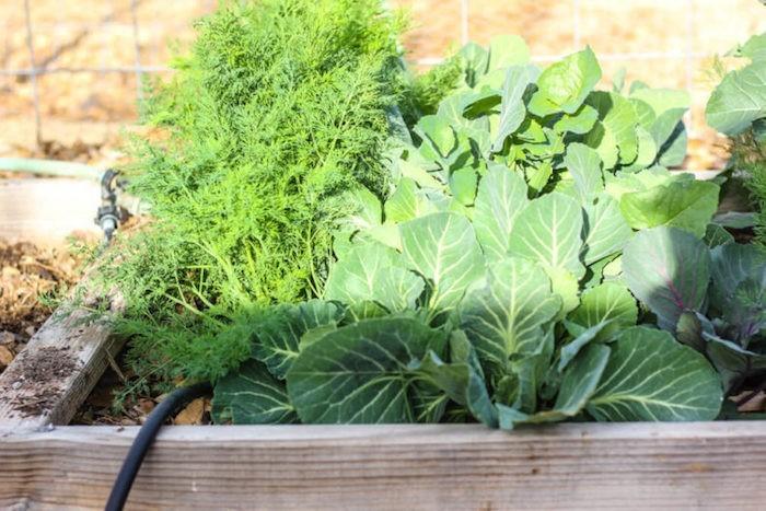 caréer-un-carre-potager-débutant-jardin-emplacement-soleil