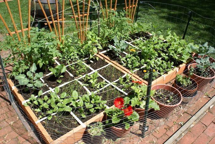 créer-un-jardin-potager