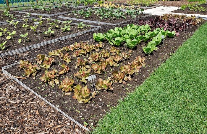 creer-jardin-potager-facile-débuter-conseils