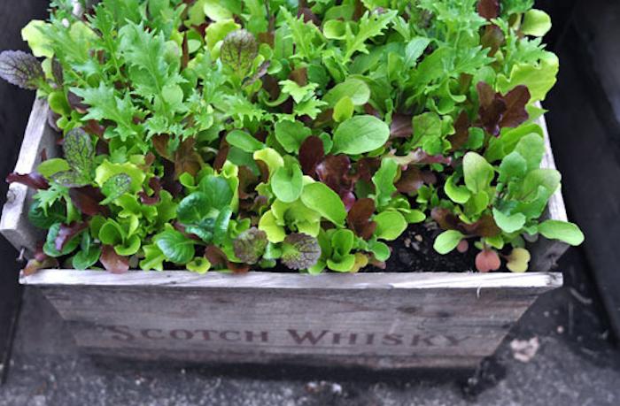 fabriquer-une-jardiniere-en-bois-pas-cher-avec-caisse
