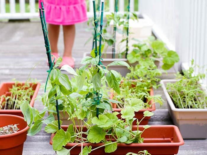 Cr er un carr potager dans son jardin conseils et id es - Faire un petit potager dans son jardin ...