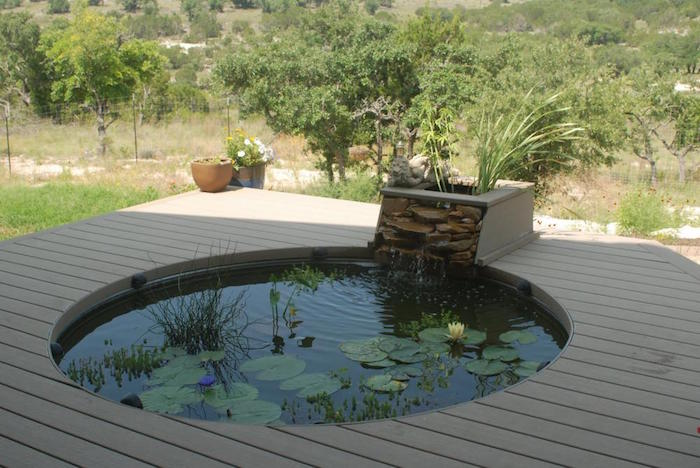 La carpe koi 42 photos de la star des bassins for Modern fish pond ideas