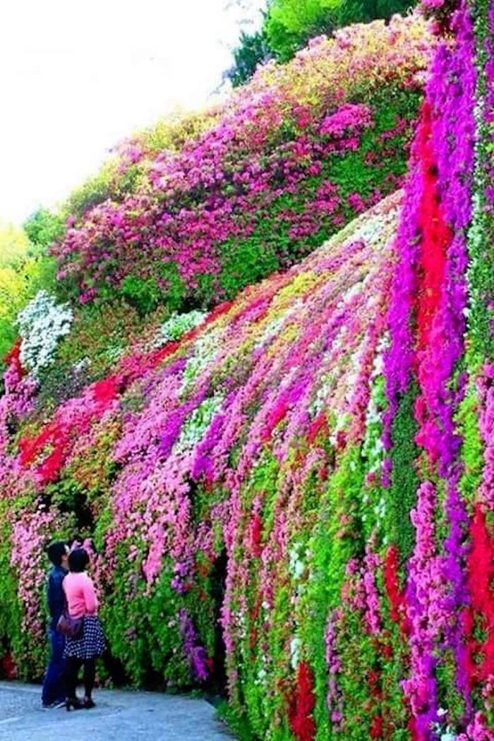 beau-bouquet-orchidee-orchidees-plante-tombante-plantes-retombantes-jardiniere-balcon