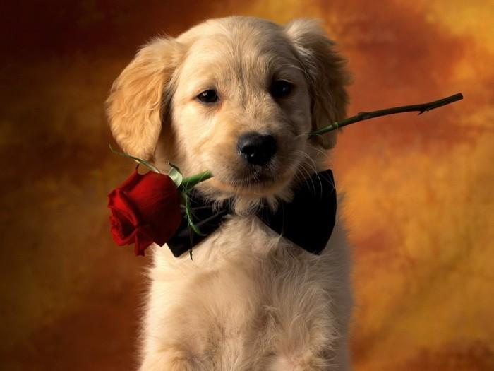bonne-saint-valentin-jour-de-la-saint-valentin-chien-mignon-et-rose