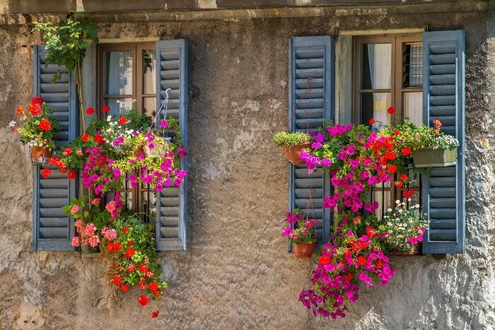 bouquet-fleurs-fenetre-pot-geranium-suspendu-balcon-plante-tombante