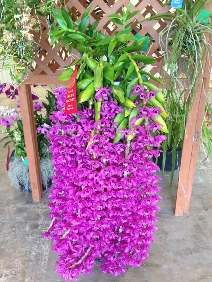 bouquet-orchidee-balcon-pot-fleurs-suspendu-plante-tombante-plantes-retombantes