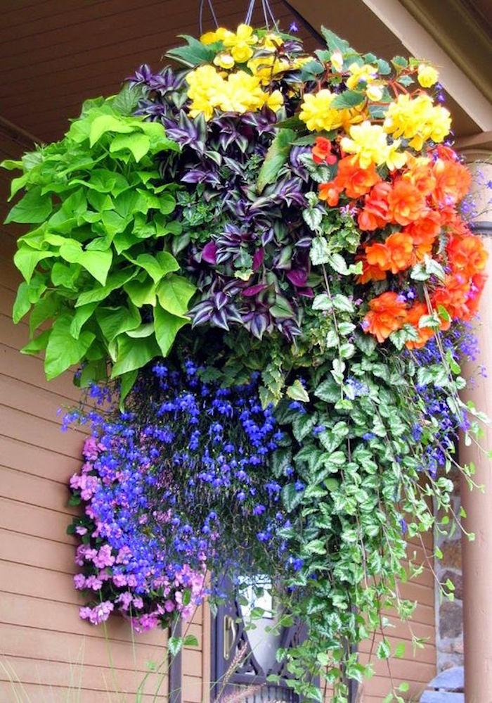 Plante tombante cultivez votre jardin int rieur en 41 photos - Plante retombante pour balcon ...