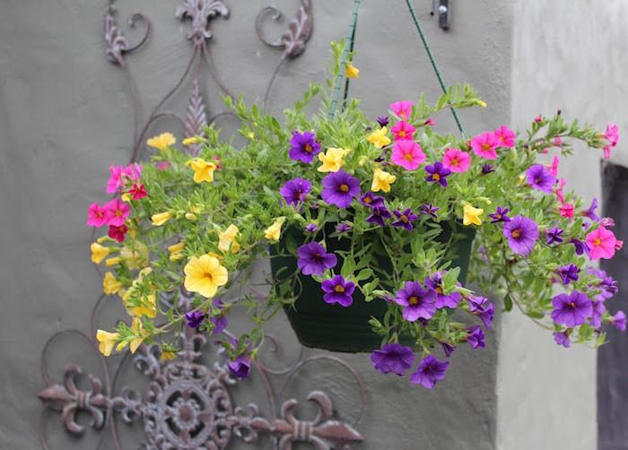 calibrachoas-pots-fleurs-jardiniere-balcon-plante-tombante-retombantes