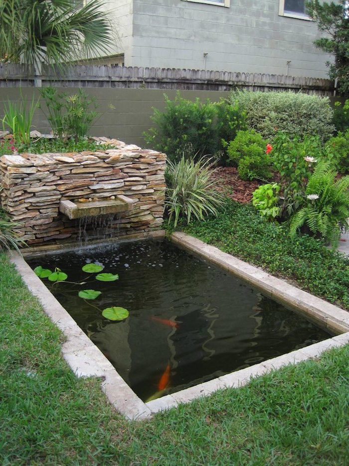 La carpe koi 42 photos de la star des bassins for Contemporary koi pond design