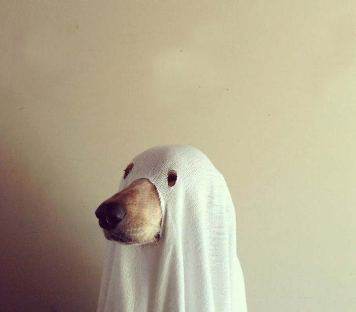 funny-ghost-idea-halloween-costume-idea-for-your-dog