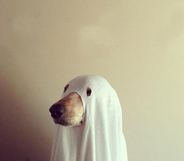 D guisement halloween facile 80 looks de derni re minute - Deguisement halloween chien ...