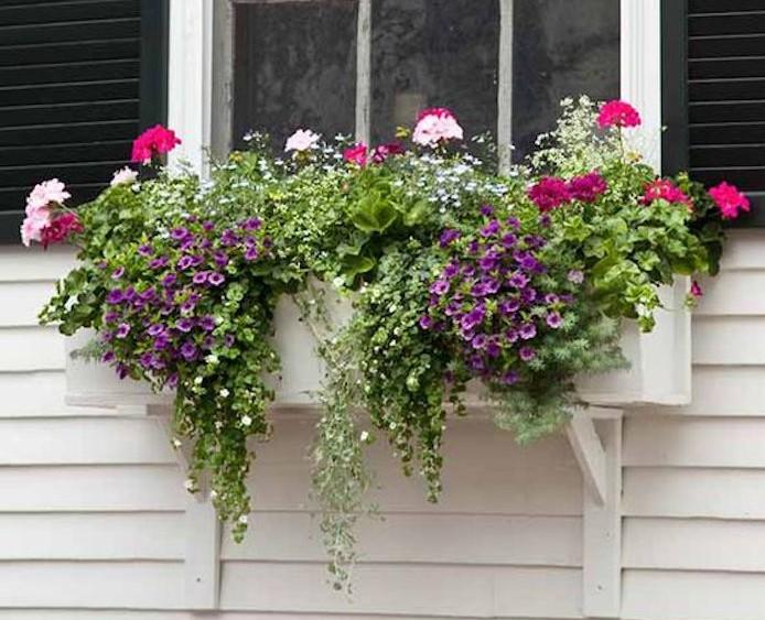 jardiniere-fenetre-pot-fleur-suspendu-plante-tombante-plantes-retombantes