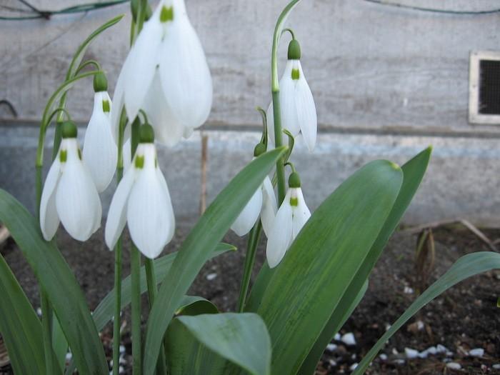 jardiniere-balcon-fleurs-suspendues-plates-tombantes