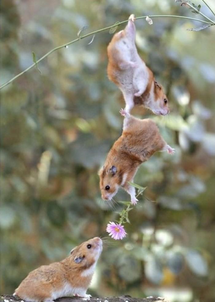 magnifique-figure-virtuelle-joyeux-saint-valentin-fleur