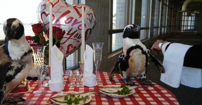 magnifique-figure-virtuelle-joyeux-saint-valentin-pinguins