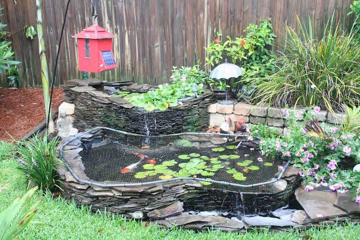 La carpe koi 42 photos de la star des bassins - Bassin pour petit jardin ...