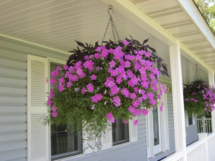 Flowers For Hanging Baskets In Part Shade : Plante tombante cultivez votre jardin int?rieur en
