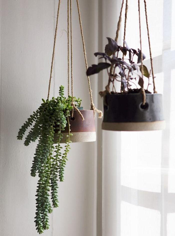 Plante tombante cultivez votre jardin int rieur en 41 photos for Plantes interieur tombantes