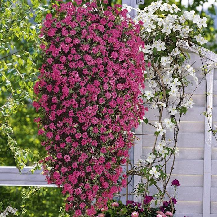 Plante retombante plein soleil cheap plante retombante plein soleil with plante retombante - Plante retombante plein soleil ...