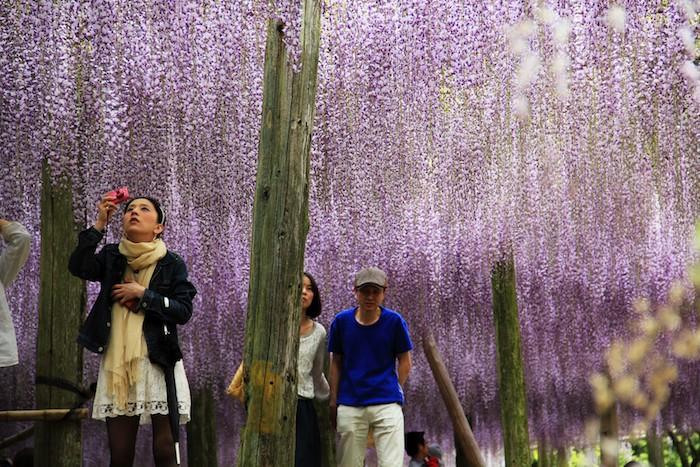 plantes-retombantes-plante-tombante-fleur-suspendue-fleurs-japons